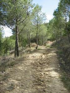 Camino de San Miguel. Photo (c) 2005 Pepe Bescós.